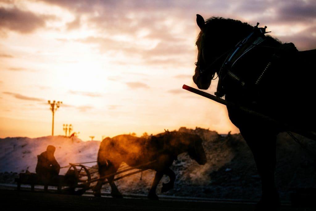 冬の馬のイメージ