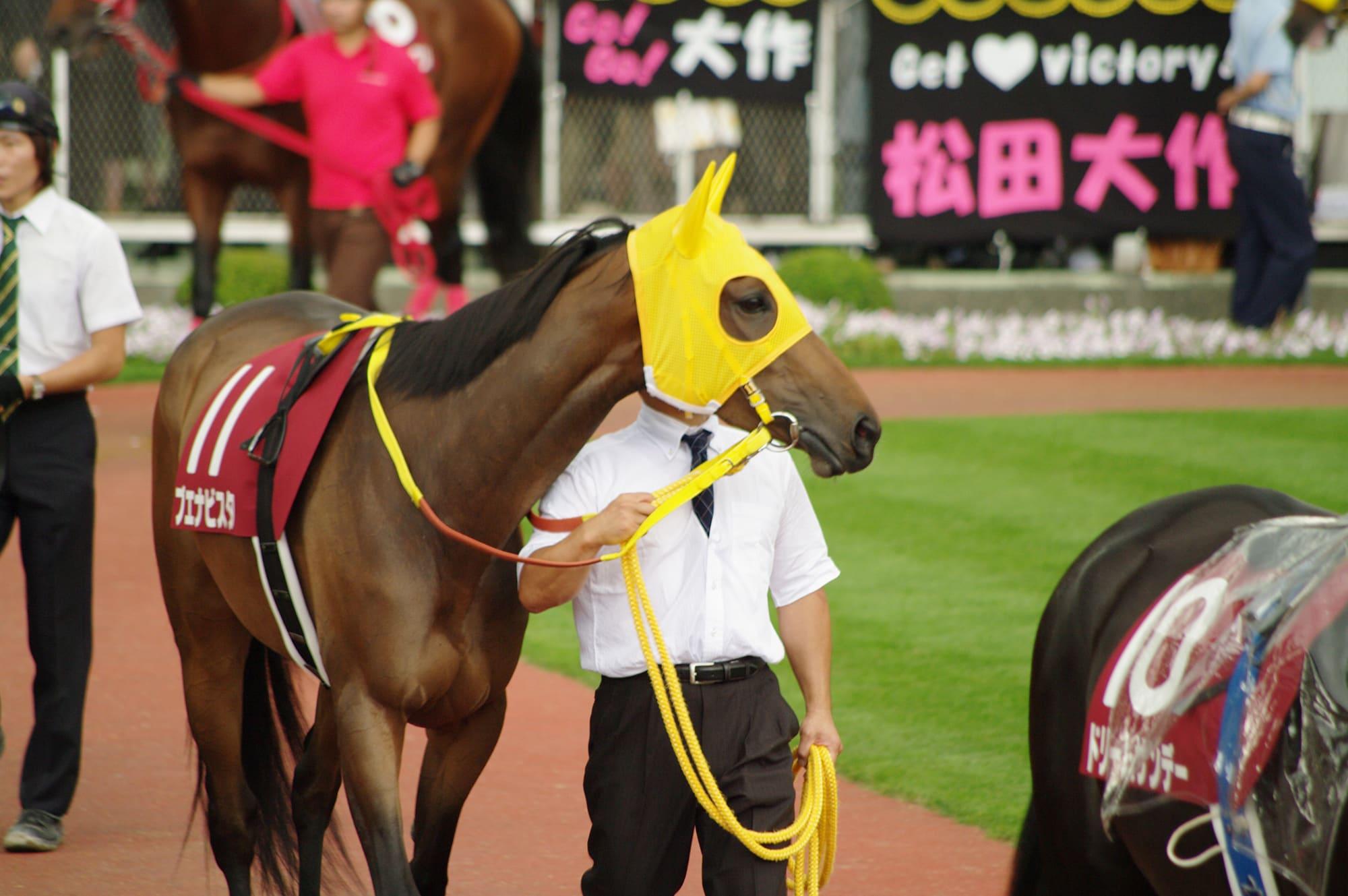 競走馬のイメージ